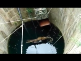 Drowning Leopard Rescued from 60-foot Well By Wildlife SOS