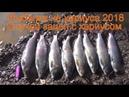 Зацеп с хариусом Приколы на рыбалке Рыбалка 2018 на хариуса Ловля хариуса Тайга Лес Природа Сибирь