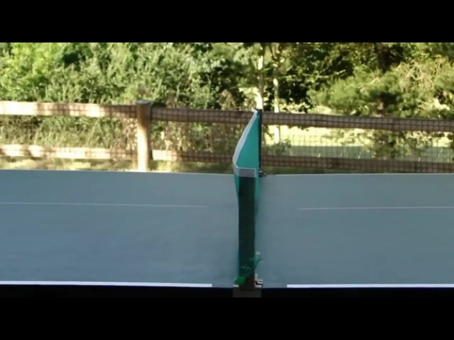 Ping-pong dog