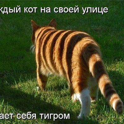 Миша Джамалов, 12 декабря 1996, Москва, id190366486