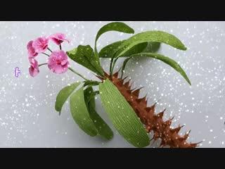 DIY How to make Euphorbia milii Flower by crepe paper Làm hoa bát tiên giấy nhún