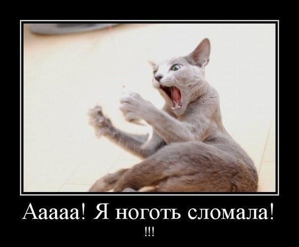 Кошкин юмор 02BvMMFklag