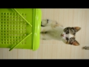 Котенок Ася ищет хозяина.
