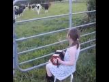 Little girl calls cows by music