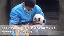 Baby Panda Held In The Arms Of Nanny Is So Happy iPanda