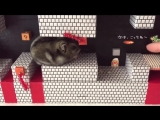Хомяк Марио (VHS Video)