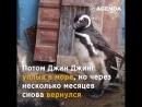 Каждый год этот пингвин возвращается к бразильцу , который когда-то спас ему жизнь... ❤️