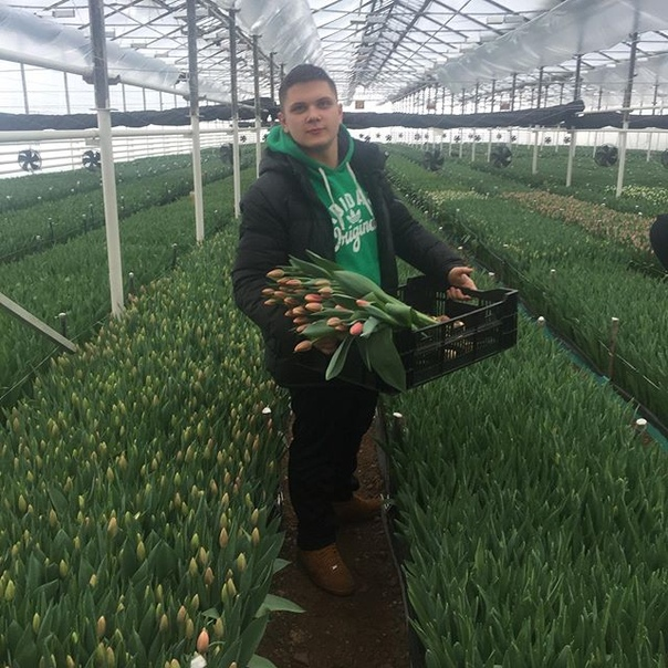 Арнольд Галимов: Успей заказать Цветы к 8 марту!!! По низким ценам!!! Скоро! Во всех городах нашей Страны: Голландские розы по цене Колумбийского кокаина! 8(961)-049-67-96
