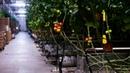 Промышленные теплицы. Как выращивают овощи Агропром.
