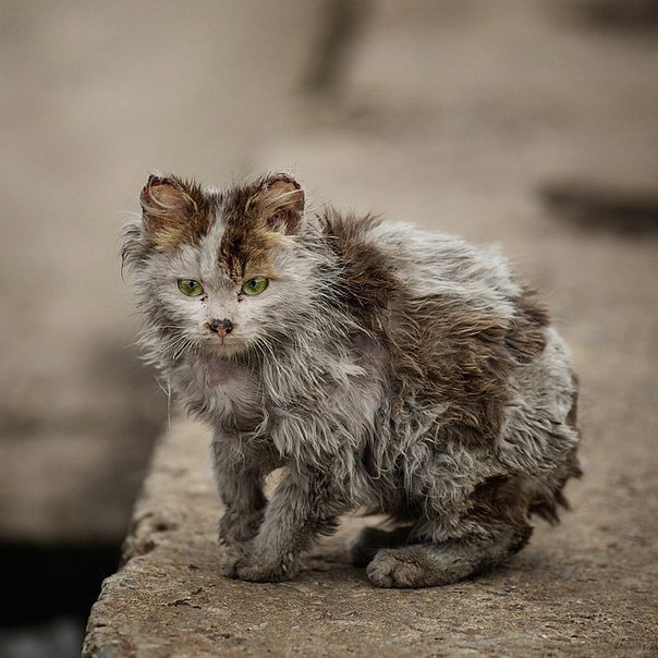 Уродливый Кот Когда-то давно жил я в стареньком доме. С тех пор пролетел не один уже год. И всем его жителям было известно Насколько уродлив был местный наш кот. Уродливый кот был всегда узнаваем – Он был одноглазый и с ухом одним. И знал он, как трудно на свете бывает, Когда ты один и никем не любим. Оторванный хвост, и поломана лапа Срослась под каким-то неверным углом. И множество шрамов.. А был он когда-то Приятным на вид полосатым котом. Кота никогда и никто не касался. Бутылки и камни…