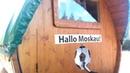 Немец на тракторе едет на Чемпионат мира через Смоленскую область