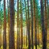 Кровати экологически чистые из дерева (массив со