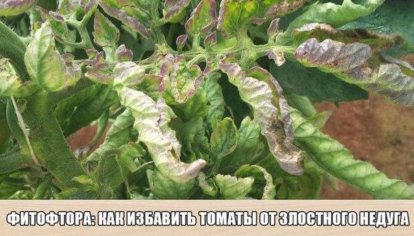 Рецепт №1 Болтушка