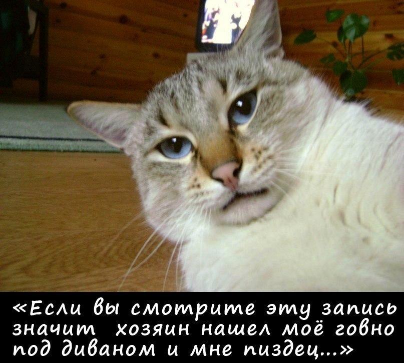 Анатолий том и жери мультик скачать упреки совести