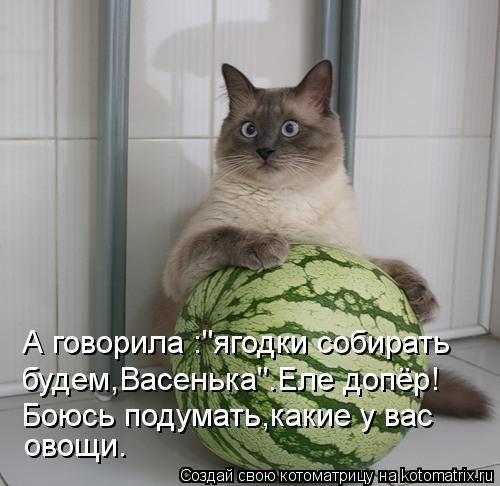 http://cs410419.vk.me/v410419453/7d0d/jVZnEblsCLQ.jpg