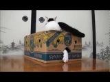 Два кошки и коробка из под бананов )