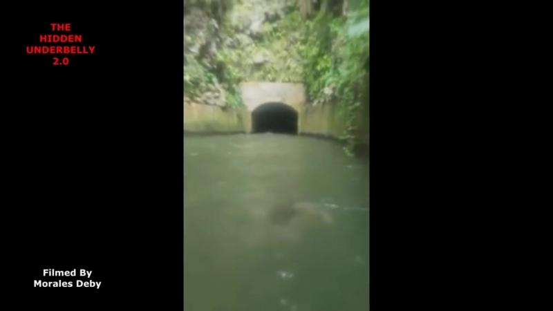 Загадочное существо преследовало лодку в Пуэрто-Рико