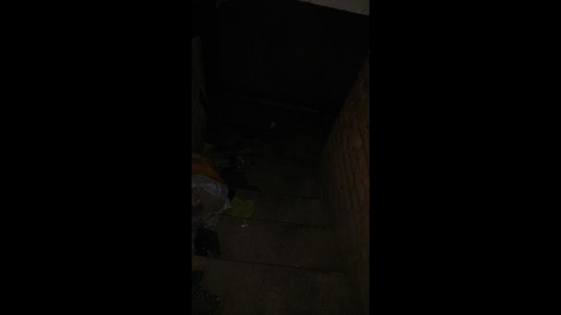 в подвал ночью