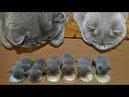 Essayer De Ne Pas Rire - Vidéos Drôles de Chats et de Chiens 11