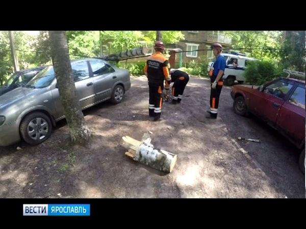 В Ярославле дерево упало на припаркованные автомобили