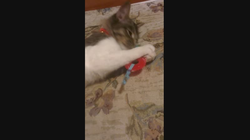 Кот играет с новой игрушечкой :3