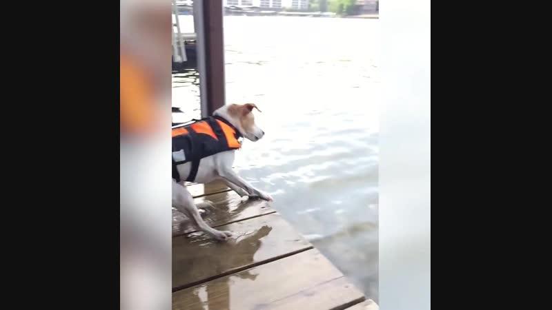 Бравые собакены!