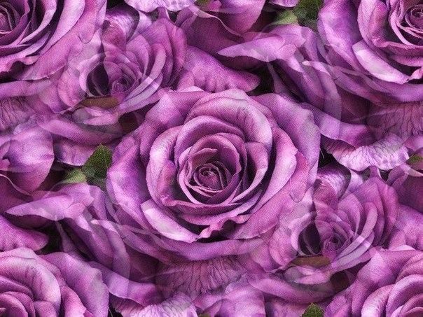 Цветочные и растительные фоны - Страница 2 1UnxAm9ZLic