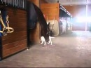 Herbie and Jabby in Puppy Love.mp4