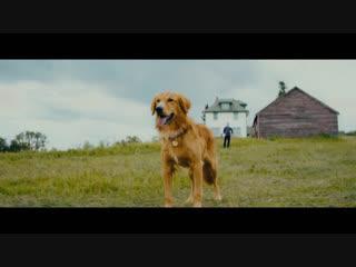 Собачья жизнь 2 / A Dog's Journey.Трейлер (2019) [1080p]