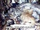 Помощь животным БУДЕННОВСК фото #3