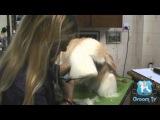 Groom Tv Br - Tosa Bebê (Puppy Beach Clip) - Adriana Skolimoski - HD #66