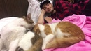 Иосиф Оганесян on Instagram Да же 💁🏽♂️ Котики пришли к гармонии а мы до сих пор ругаемся по пустякам а потом раздуваем до апогея и сами не мо