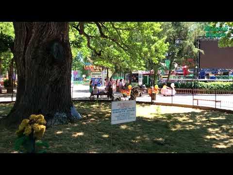 Симферопольский дуб-великан