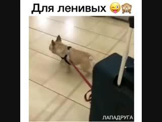 Для этого они завели собаку 😬