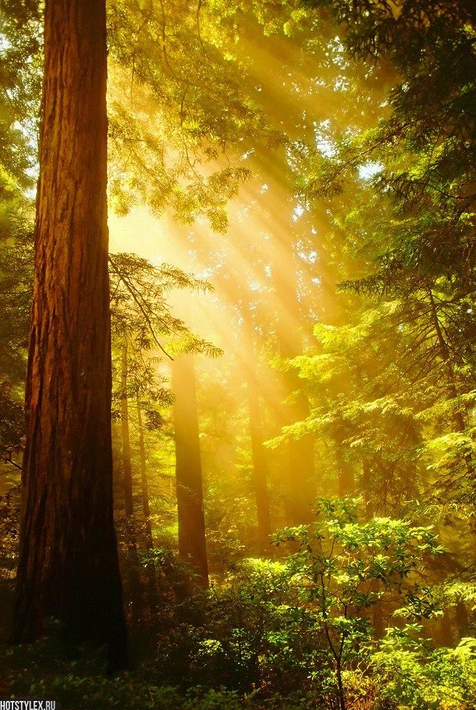 Фото сказочный лес
