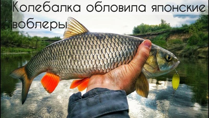 Микроколебалка сделала рыбалку. Ловля голавля сплавом на реке.