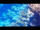 Под водой.Красное море.