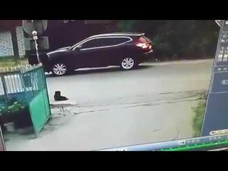 Водитель Nissan застрелил бездомную собаку