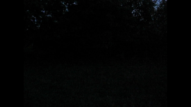MVI_8776 180521 пенье птиц в саду Александрино в Санкт-Петербурге на тему КАТАСТРОФА САДА как итог 2000 – 2018 гг.