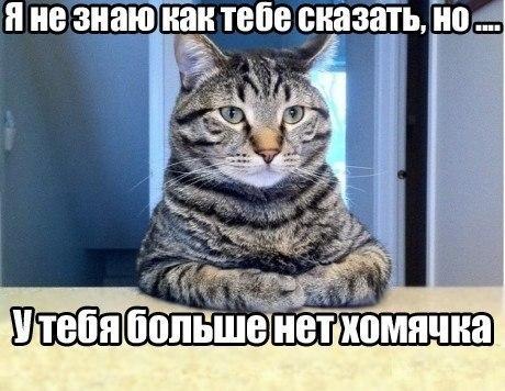 http://cs411819.userapi.com/v411819057/63cb/OBOUC6vGq_I.jpg