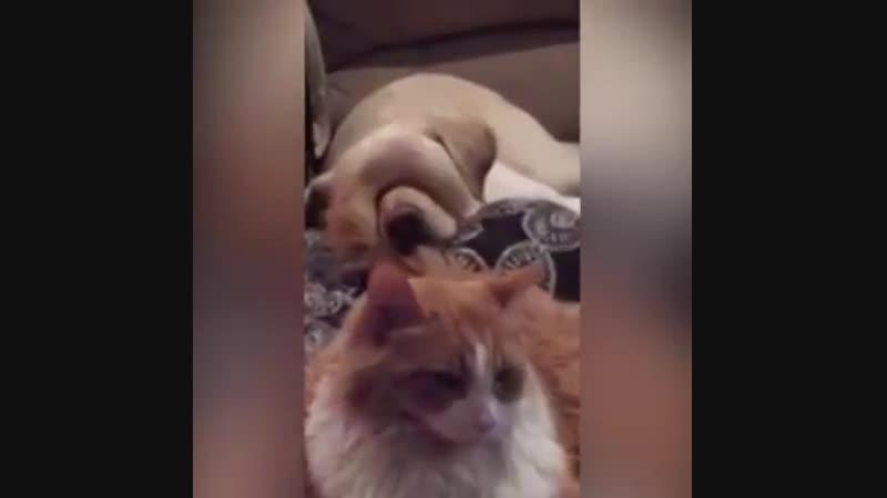Котейки и собакены