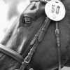 картинки с лошадьми