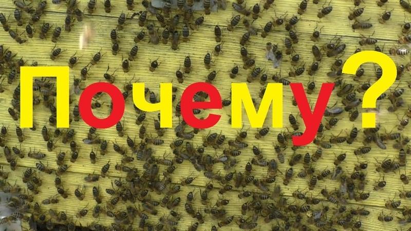 Почему среднерусские пчелы склонны к частому роению
