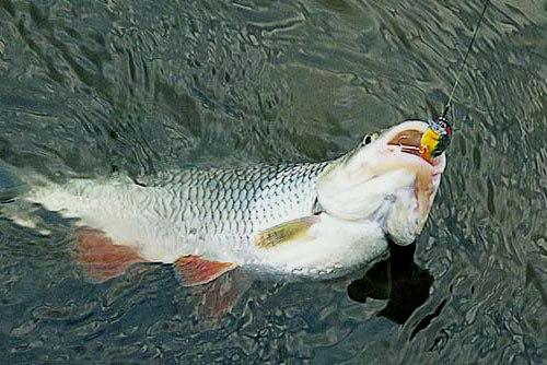 Болтуна видать по слову, рыбака - по улову.