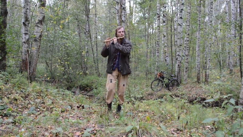 Издали нам сияет страна гимн Игра на флейте в лесу