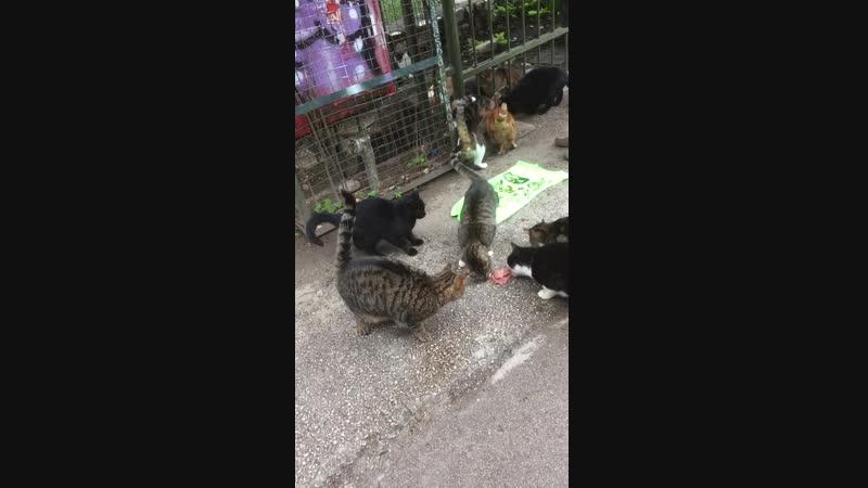 Музыкант у Акрополя кормит котов. Так вот кто из них практически бегемотов сделал!