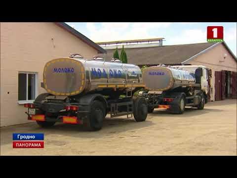 Почти половина производимого в Беларуси молока самого высшего «экстра»-класса». Панорама