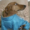 PetStuff одежда для домашних животных (Киев)