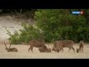 01 Дикая Шри Ланка Озерный край Wild Sri Lanka Land Of Lakes 2015