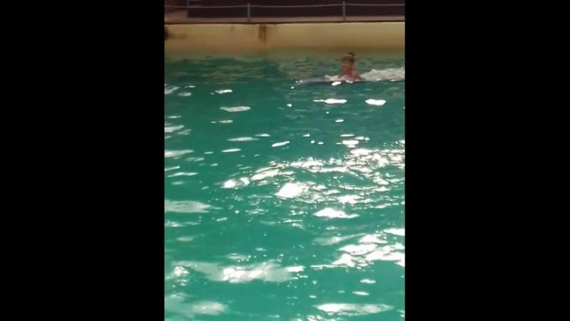 Плавание с дельфинами Ростовский дельфинарий